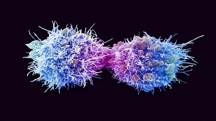 روش انتقال ویروس اچ پی وی